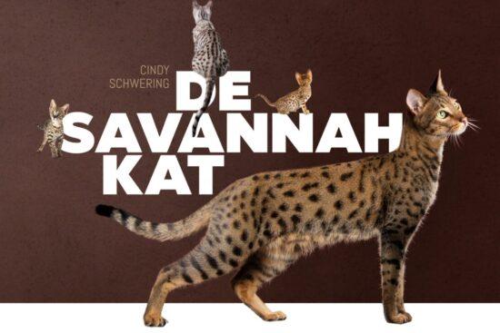 de_savannah_kat_cover_3